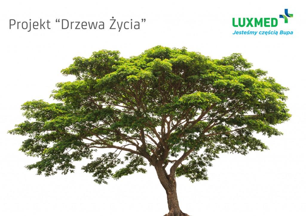 drzewo Lux Med
